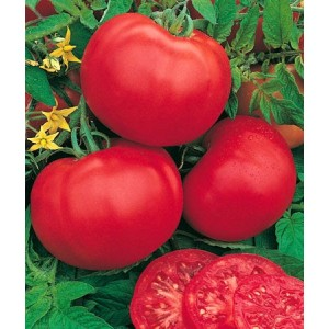 TOMATE PAOLA 1kg